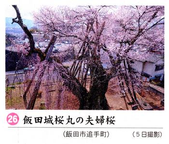 南桜26.jpg