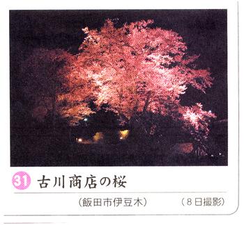 南桜31.jpg