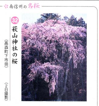 南桜32.jpg