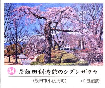 南桜34.jpg