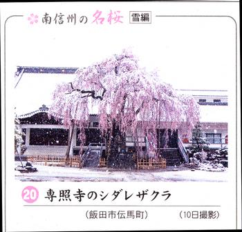 南桜専照寺 10.jpg