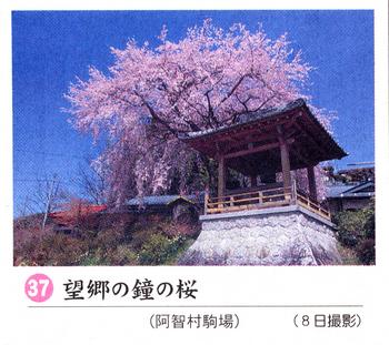 南桜情報37.jpg