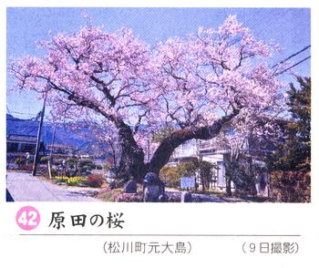 南桜情報42.jpg