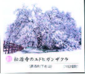 南桜松源寺11-2.jpg
