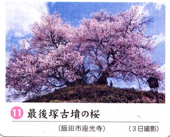桜情報11.png