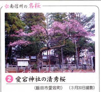 桜情報2.png
