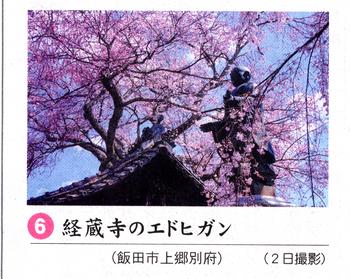 桜情報6.png