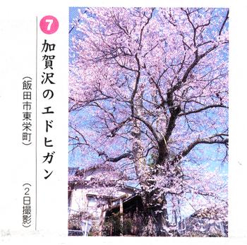 桜情報7.png