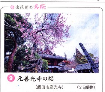 桜情報9.png